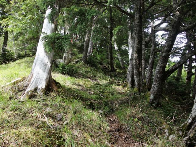 八ヶ岳・赤岳(地獄谷~ツルネ東陵)登山口コースガイド 草付きの開けた斜面【登山口ナビ】