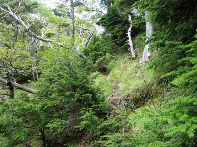 八ヶ岳・赤岳(地獄谷~ツルネ東陵)登山口コースガイド 左巻き【登山口ナビ】