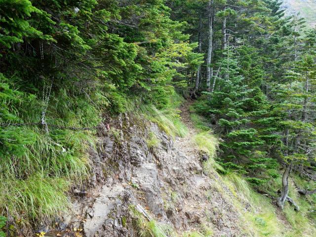 八ヶ岳・赤岳(地獄谷~ツルネ東陵)登山口コースガイド 樹林帯【登山口ナビ】